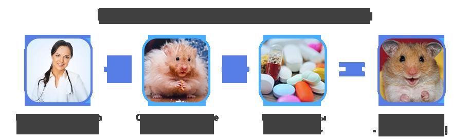 Лечение Грызунов