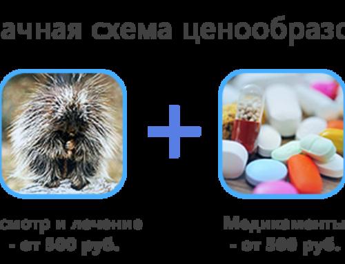 Лечение экзотических животных на дому