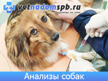 Анализы собак на дому