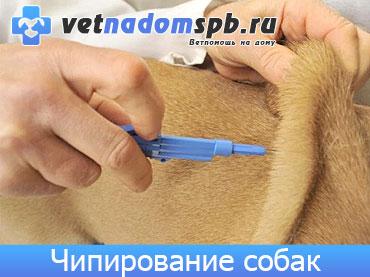 Чипирование собак на дому