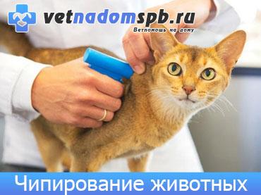 Чипирование животных на дому
