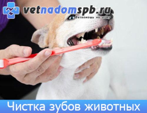 Чистка зубов животным