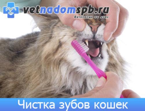 Чистка зубов кошек