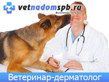 Ветеринар-дерматолог в Москве