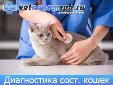 Диагностика состояния кошек на дому