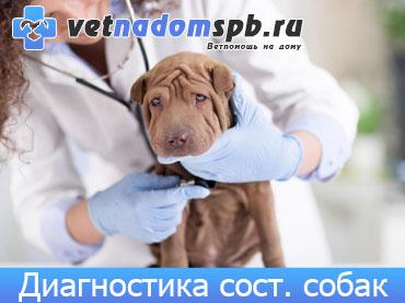 Диагностика состояния собак на дому