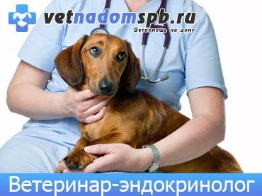 Ветеринар-эндокринолог в Москве