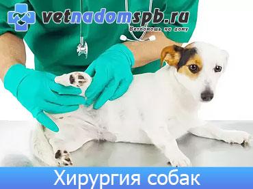 Хирургия собак на дому