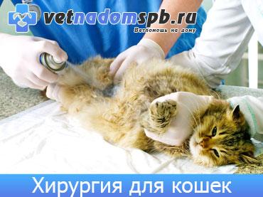 Хирургия для кошек и котов на дому