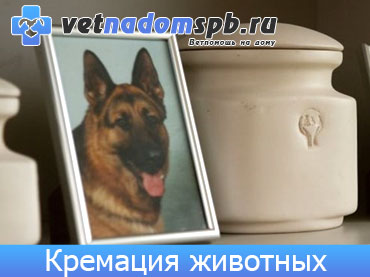Кремация и ритуальные услуги для животных