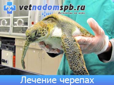 Лечение черепах на дому