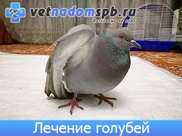 Лечение голубей на дому
