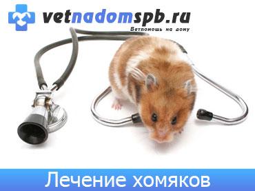 Лечение хомяков на дому