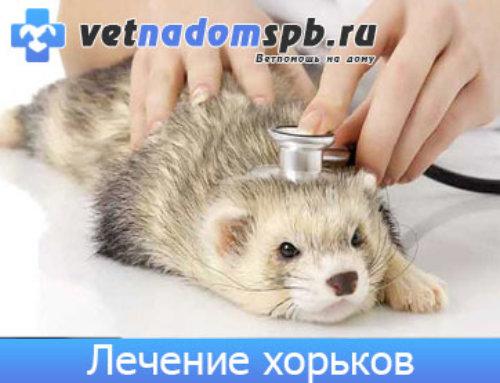 Лечение хорьков