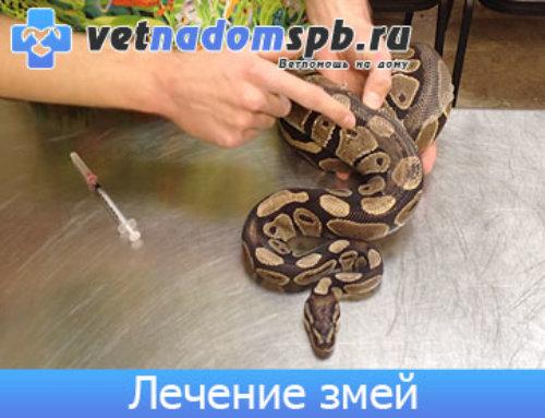 Лечение Рептилий