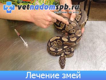 Лечение змей на дому