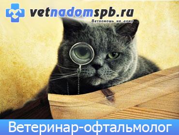 Ветеринар-офтальмолог в Москве