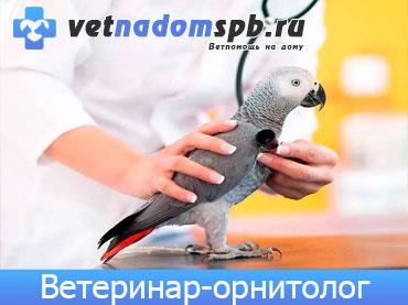 Ветеринар-Орнитолог в Москве
