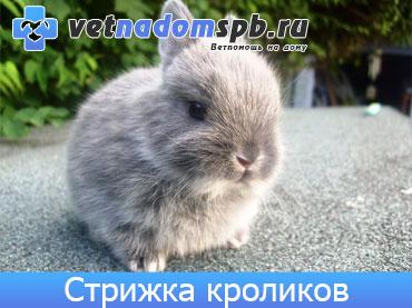 Стрижка кроликов к на дому
