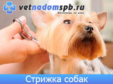 Стрижка, груминг и тримминг собак на дому