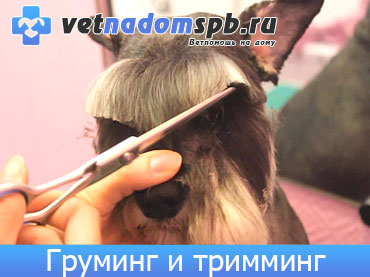 Стрижка, груминг и тримминг животных на дому