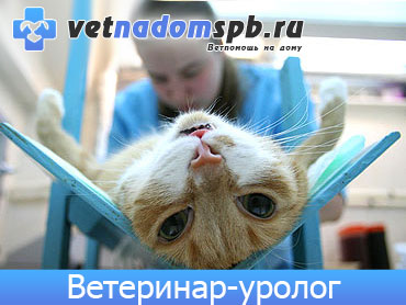 Ветеринар-уролог в Москве