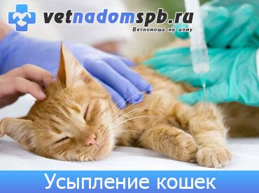Гуманное усыпление кошек на дому