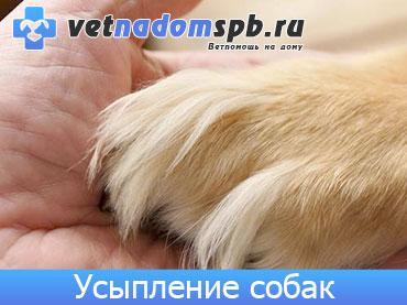 Гуманное усыпление собак на дому