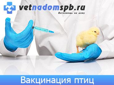 Вакцинация птиц на дому