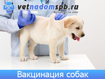 Вакцинация собак на дому